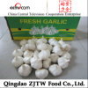 Chinese Jinxiang Fresh White Garlic