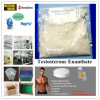 Test Ester Steroids Raw Test Enan & Testosteron Enanthate with 99.1% Purity