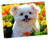 Aluminum Photo Panels for Cute Animals