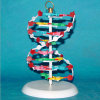 High Quality Medical Research Human DNA Model (R180107)