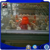 Prefabricated Galvanized Poultry Chicken Steel Structure House