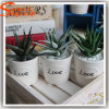 Decoration Artificial Zebra Succulent Aloe Plant