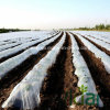 White and Black PE Mulch Film for Agriculture