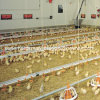 High Quality Automatic Poultry Feeding and Drinking System for Chicken