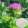 Milk Thistle P. E. /98% Silymarin for Hepatitis Curing
