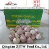 2013 Jinxiang Fresh Garlic