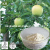 China Supplier Hot Sale 100% Natural Apple Root Bark Phloridzin, Apple Phlorizin, 95% Phlorizin Apple Extract