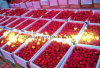 Competitive IQF Frozen Strawberry for Exporting