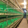 H-Type Chicken Cage Poultry Farm Equipment for Layer Chicken
