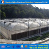 2017 Hot Sale Poly Plastic Covering Greenhouse for Flowers