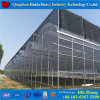 Agriculture Plastic Film Greenhouse Manufacturer for Tomatoes