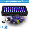 Full Spectrum Programmable It2080 99X3w LED Aquarium Reef Lighting