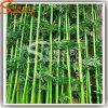 Garden Decoration Artificial Lucky Bamboo Plants Stick Craft Bamboo Poles Wholesale