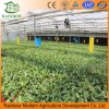 Greenhouse Water Saving Drip Irrigation System
