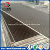 1250X2500mm Oversize Plywood / Film Faced Plywood for Europe Market