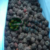 IQF Frozen Fresh Blackberry Fruit in High Quality
