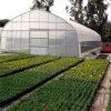 Factory Price High Poly Tunnel Film Greenhouse for Sale