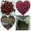 Caulispolygonimultiflori Extract /Polygonum Multiflorum Extract/