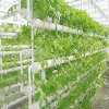 High Quality Multi-Span Hydroponic Agricultural Greenhouse