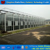 China Factory Supply Glass Greenhouse with Hydroponic System