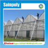 Multispan Film Green House for Strawberry