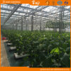 Venlo Structure Glass Greenhouse with Sbustrate Culture