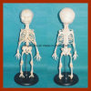 High Quality Anatomy Baby Skeleton Model