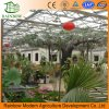 High Quality Multi-Span Commercial Greenhouse for Sale