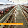 Tianrui design complete controled poultry shed for chicken