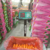 Orange Color Good Quality Fresh Carrot
