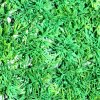 UV Protected Plastic Grass