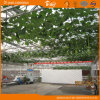 China Supplier Multi-Span Glass Greenhouse for Planting Vegetables