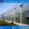 Low Cost Tunnel Greenhouse for Sale Economico Invernadero