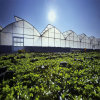 High Quality Plastic Greenhouse, Agricultural Plastic Greenhouse, Commercial Plastic Greenhouse.