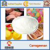 Food Additive Refined Carrageenan