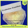 99% Raw Steroid Powder 10161-33-8 USP Parabolan / Trenbolone Enanthate