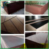 Marine Plywood/Shuttering Plywood/Film Faced Plywood//Timber/ Building Materials