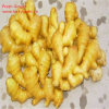 Different Size and Packing Fresh Ginger on Sale