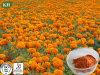 Eye Health Marigold Extract Zeaxanthin; Lutein