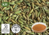 Fennel Seed Extract -10: 1