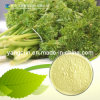 Natural Chamomile Extract 10%-98% Apigenin