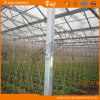 Venlo Type Greenhouse Covered by Glass China Supplier