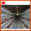 Automatic/Semi-Automatic H Type Layer Chicken Cage System From Jinfeng