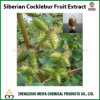 Factory Supply Siberian Cocklebur / Xanthium Strumarium Fruit Powder Extract