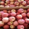 Fresh Red Gala Apple Food