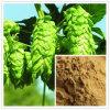 Hops Extract 4: 1, 5: 1, 10: 1, Rutin 0.2%