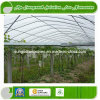 UV Resistant Nonwoven Agricultural Greenhouse Cover