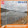Multi Span Galvanized Steel Frame PE Film Greenhouse for Commercial