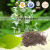 100% Pure Natural Herb Medicine Schizonepeta Jing Jie
