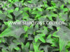 Decorative Artificial Wall Grass for Indoor and Outdoor Decoration (SUNW-MZ00024)
